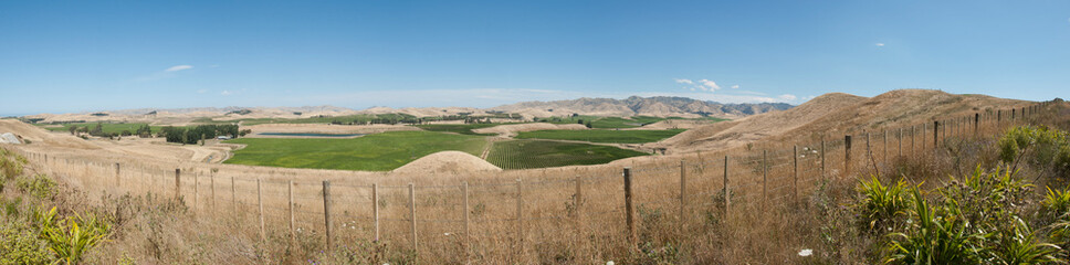 Vineyard of Marlborough in New Zealand