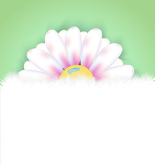 Spring flower with copy space background