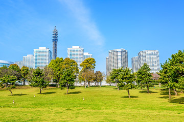 Landscape grass prospects the Yokohama buildings of landmark