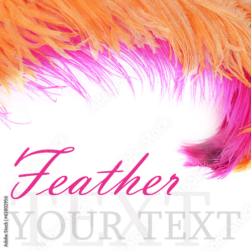 Tuinposter Zwaan Pink beautiful feather isolated on white