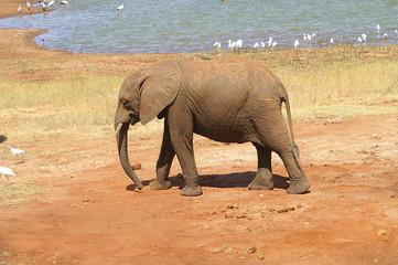 Afrika, Zoologie