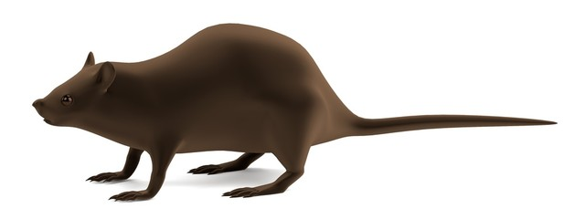 realistic 3d render of rat