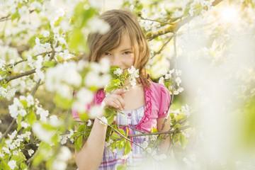 Mädchen zwischen Kirschblüten