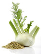 Fresh Fennel and Fennel Seed