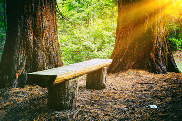 Wood bench in the summer forest