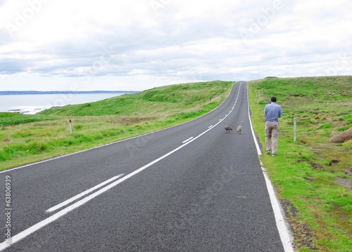 A man photographs emu birds at the road