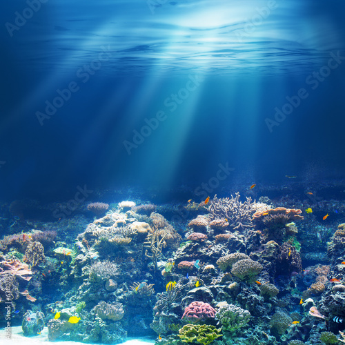 Sea or ocean underwater coral reef - 63807931