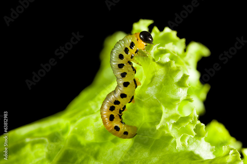 Macro of caterpillar climbing on leaf