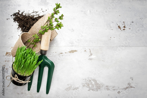 Spring gardening tools on white woods