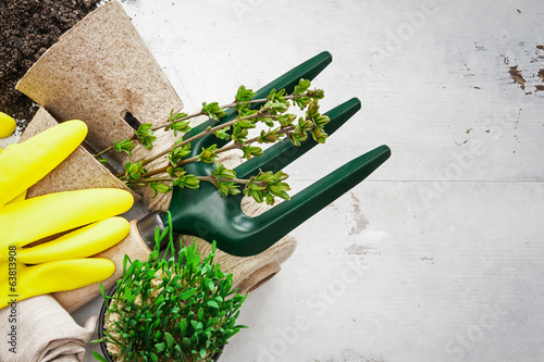 Tools for spring gardening on white woods