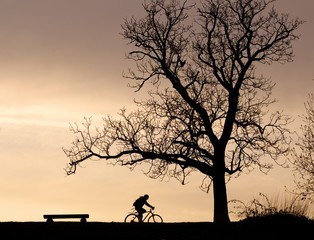 Tree silhouette and cyclist