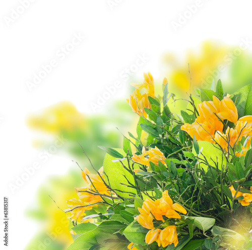 Flower bunch with yellow freesias ,floral border, isolated