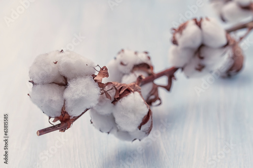 Cotton buds branch with retro filter effect . Small Depth of Fie