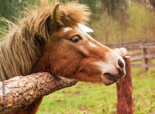 Pony laid its head on the wooden fence - filtered