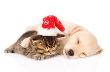 golden retriever puppy dog  and british cat with santa hat sleep