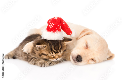 golden retriever puppy dog  and british cat with santa hat sleep