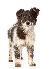 young mixed breed dog in full height. isolated on white