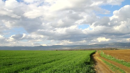 Dirt road and wheat in valley