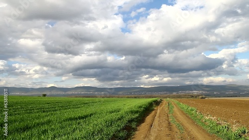 Dirt road and wheat of field