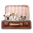 Thea e Achille in valigia