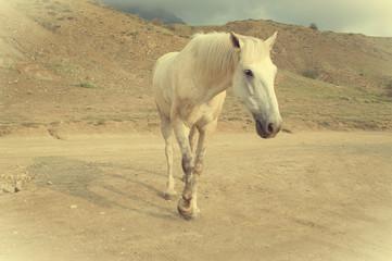 funny white horse