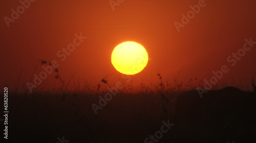 wildebeests and the sunset