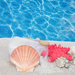Scallop shell with sea spa setting