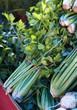 farm celery