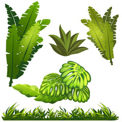 Image of leaves and grass jungle
