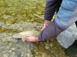 rilascio pesce
