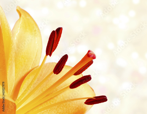 Close up image of bright orange lily on bokeh background