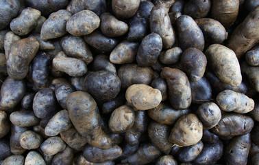 Black Potatoess