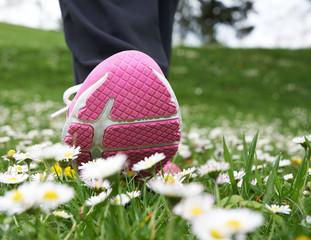 Leg walking on daisy