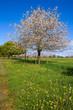 Paysage campagnard au printemps 06