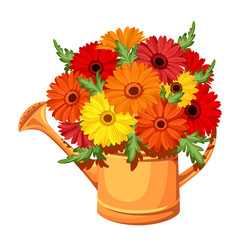 Bouquet of gerbera flowers in watering can. Vector illustration.