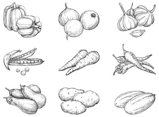 Vector set 1 of vegetables at engraving style