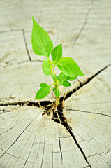 Small green seedling growing from tree stump
