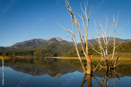 Dead Tress and Reflections in Lake Buffalo, Victoria