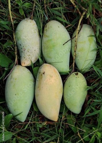 mangoes on a natural background