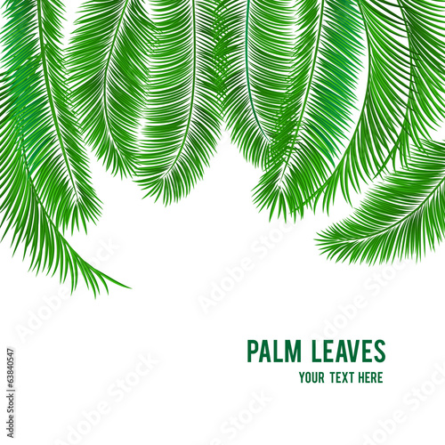 Tropical palm tree background banner