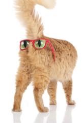 Rote Katze mit Sonnenbrille auf dem Hintern