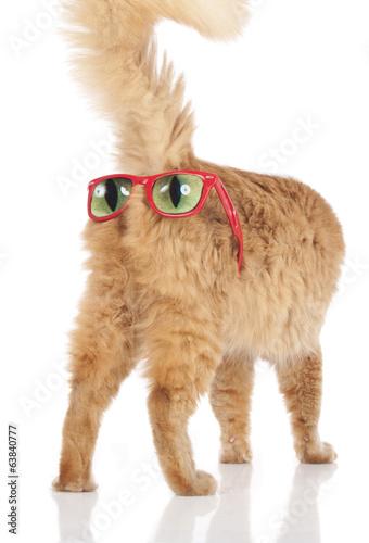 canvas print picture Rote Katze mit Sonnenbrille auf dem Hintern