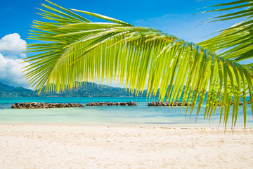 Tropical beach with palm, beach vacantions, travel.