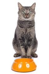 Braune Katze sitzt hinter Futternapf