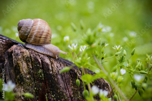 Snail sitting on a tree trunk in a spring day