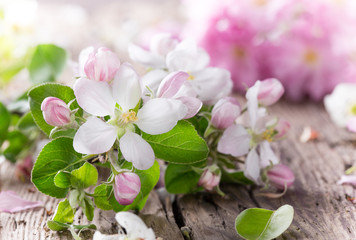 Spring blossoms background