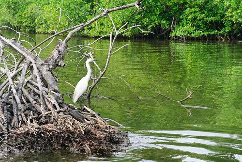 Egret on the lake