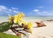 coquillage et frangipanier sur plage de l'île Maurice