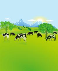 Berglandschaft mit schwarz, weißen Kühen