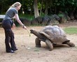 woman feeds big turtle